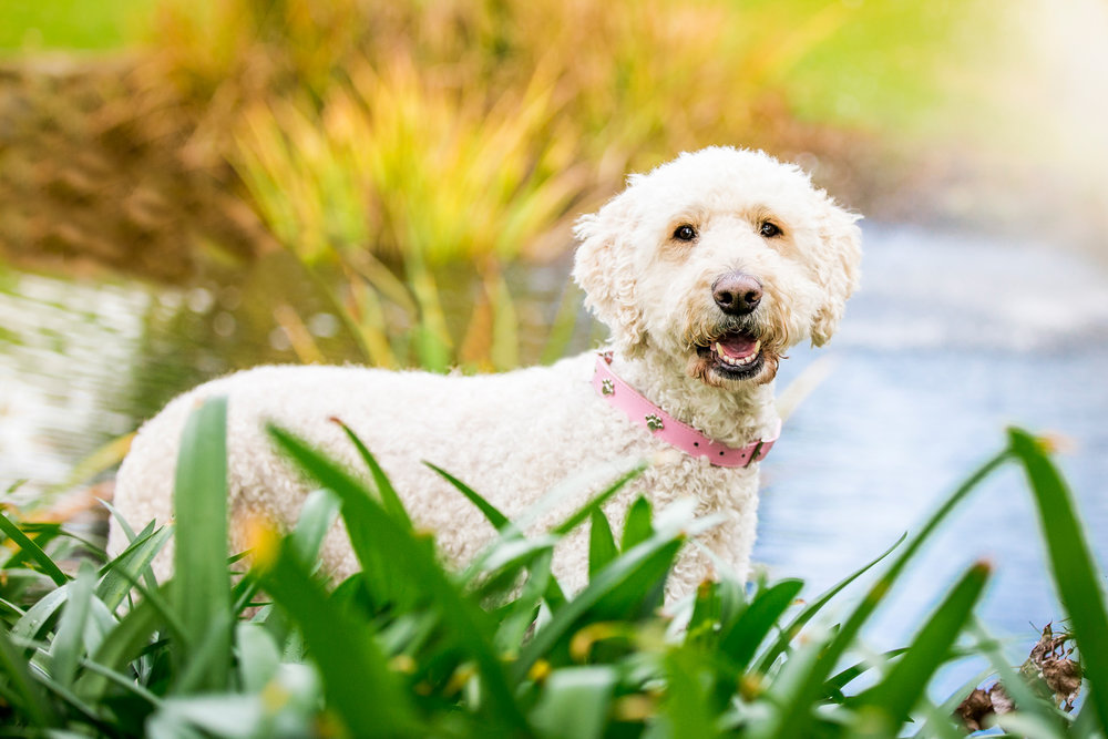 maggie-molly-teal-berry-ragamuffin-June_14(57)-edit-web.jpg