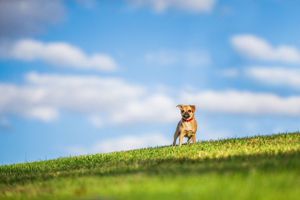 nala-ragamuffin-August_14(41)-web.jpg