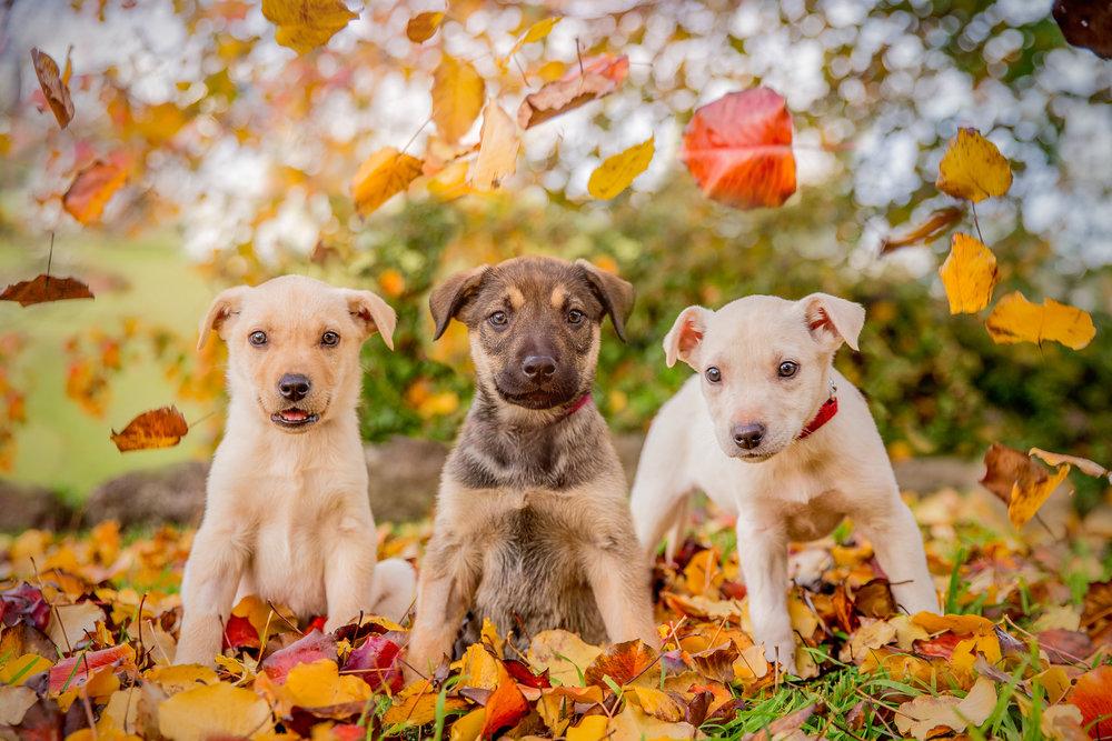 autumn-puppies-July_16(0064)-web.jpg