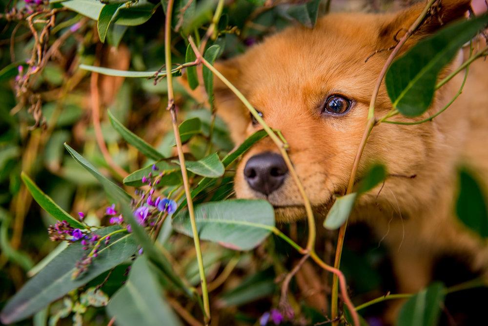 foxe-ragamuffin-June_16(38)-web.jpg