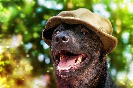 Hund 2.jpg