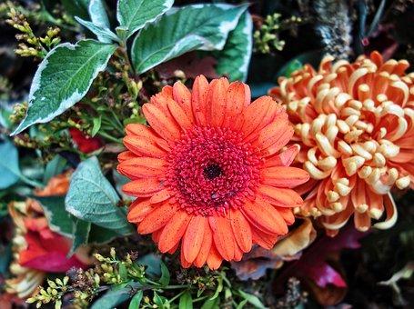 cemetary flower.jpg