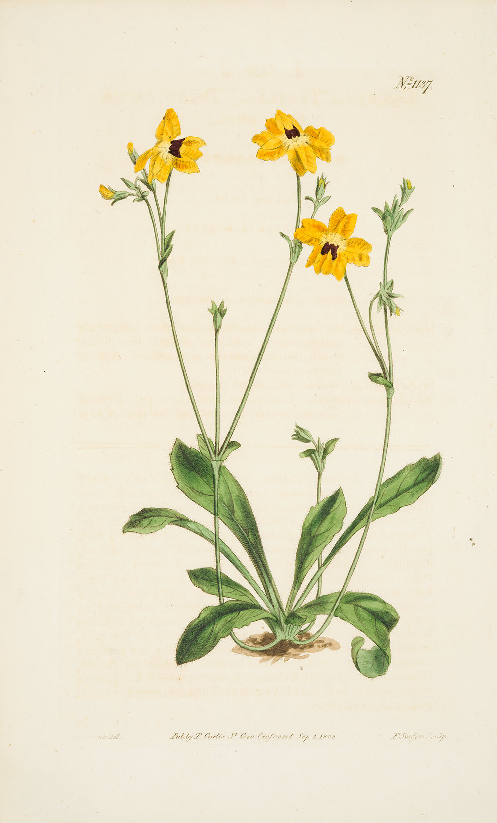 from Curtis' Botanical Magazine