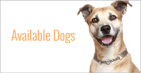 available dog-graphic-484x250.jpg