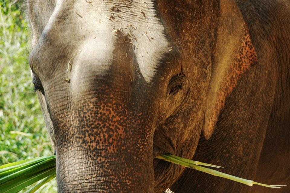 TongWan_Elephant.jpg