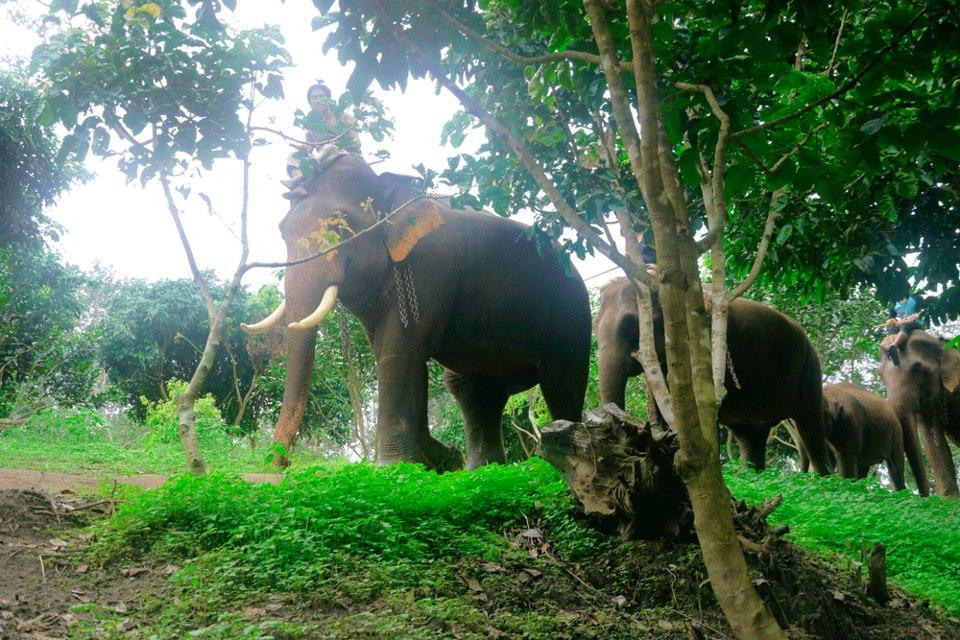 SomJai_Elephant.jpg