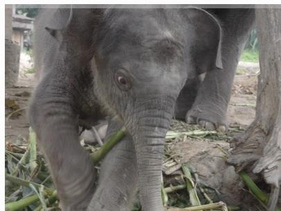 TangMo_Elephant.jpg