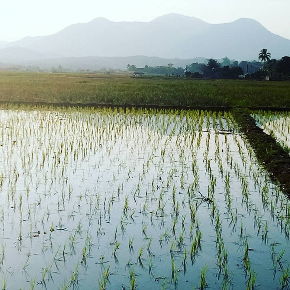 Beautiful Mae Wang landscapes