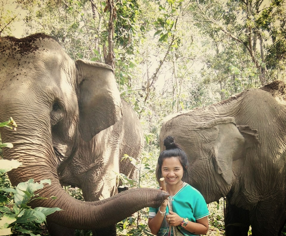 Nukul and 2 elephants she has rescued