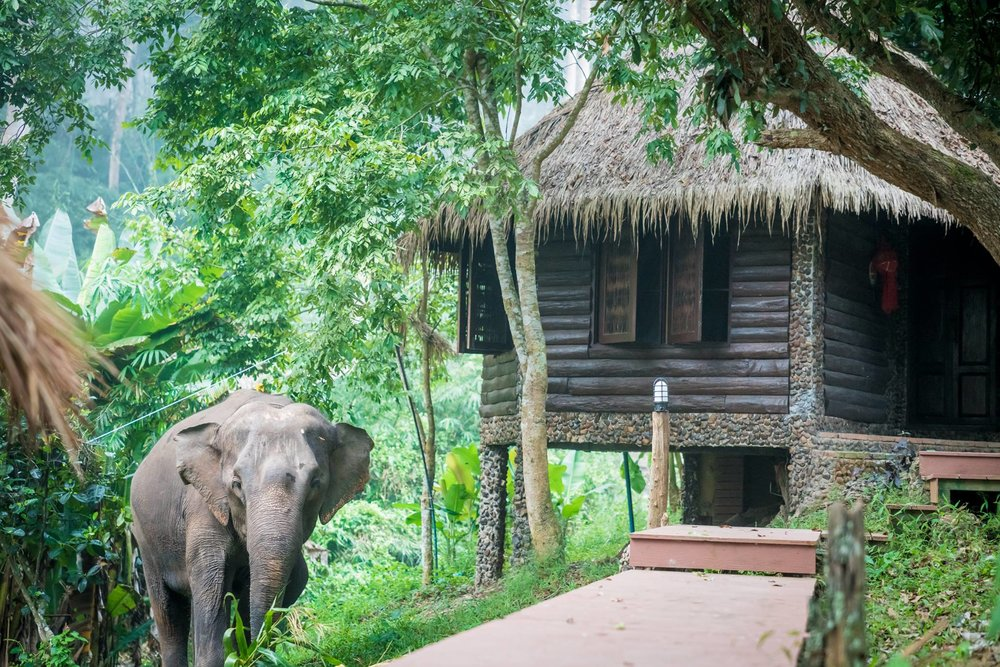 bungalow-elephants.jpg