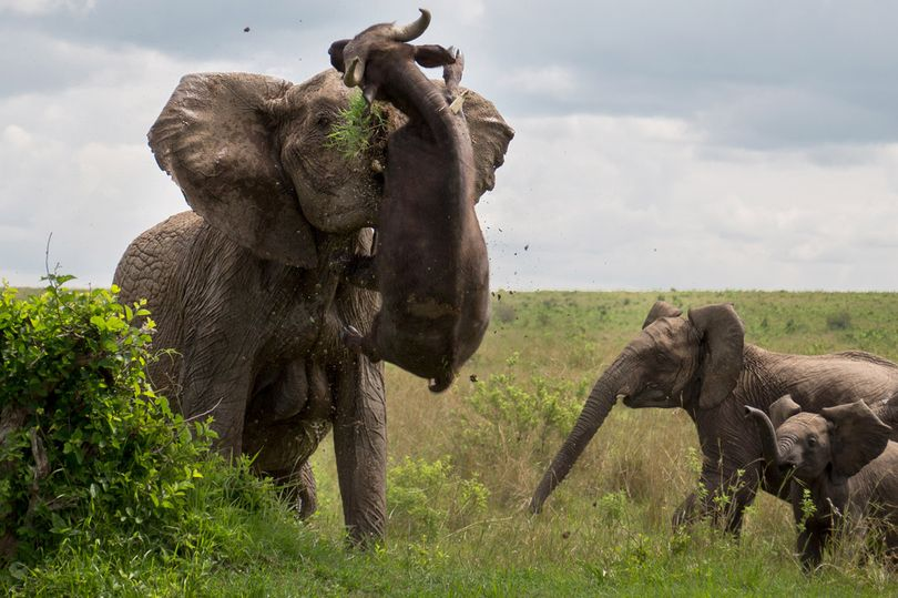 Don't under estimate how strong an elephant is.