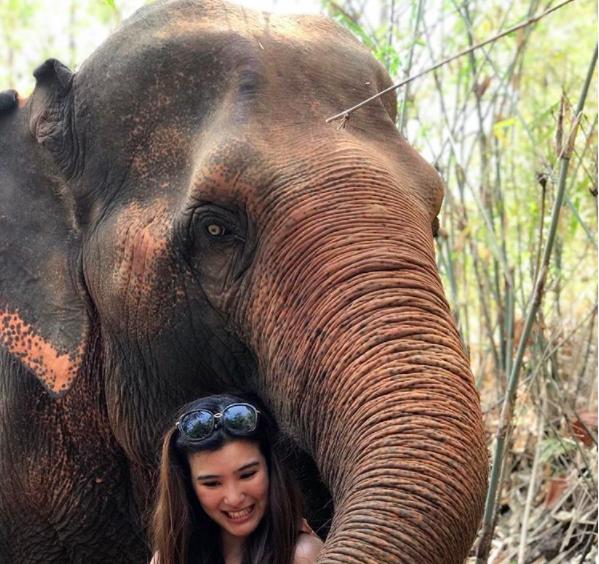MaeSa Elephant