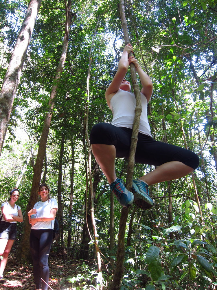 junglewisdom.jpeg