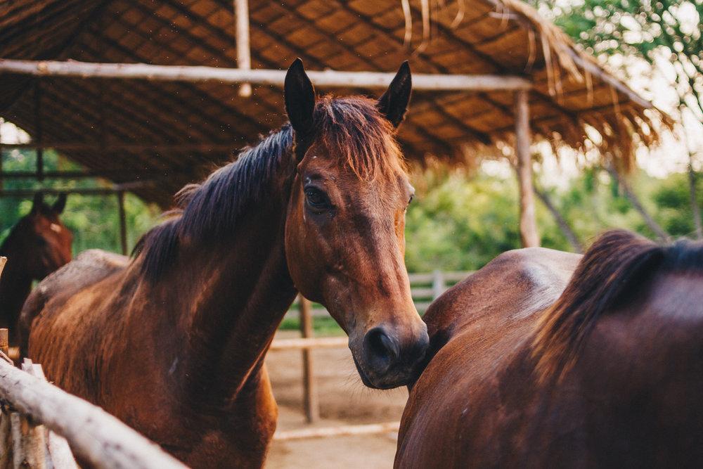 Second-Wind-Horse-Rescue-Ranch-ChaingMai-Suniko-Photo-October-2018-56.jpg