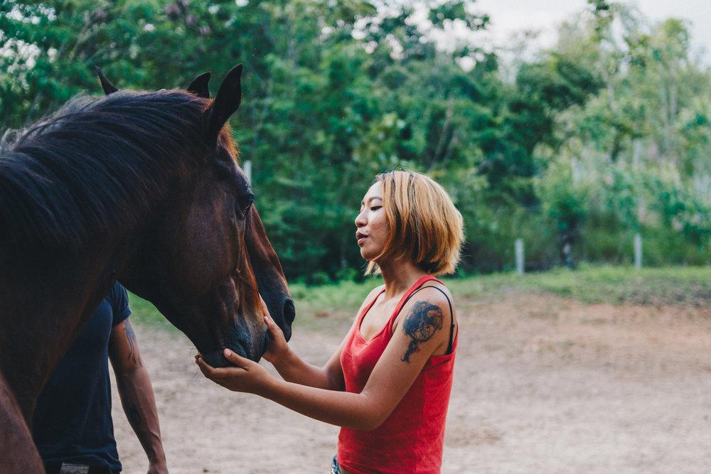 Second-Wind-Horse-Rescue-Ranch-ChaingMai-Suniko-Photo-October-2018-74.jpg