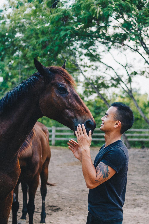 Second-Wind-Horse-Rescue-Ranch-ChaingMai-Suniko-Photo-October-2018-79.jpg