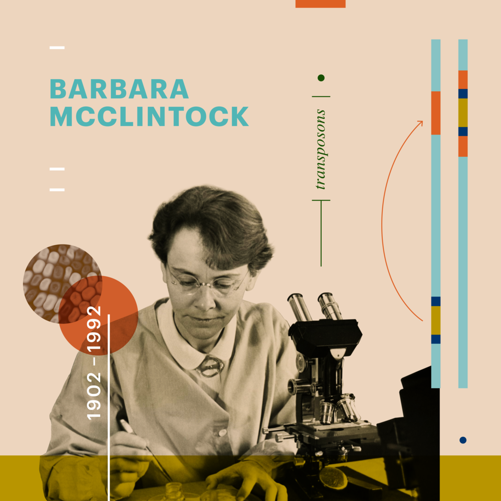 barbara_mcclintock.png