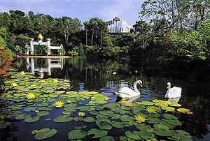Lake-Shrine-with-swans.jpg