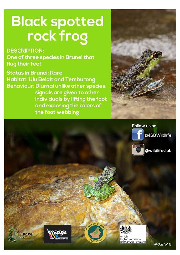 frog2.jpg
