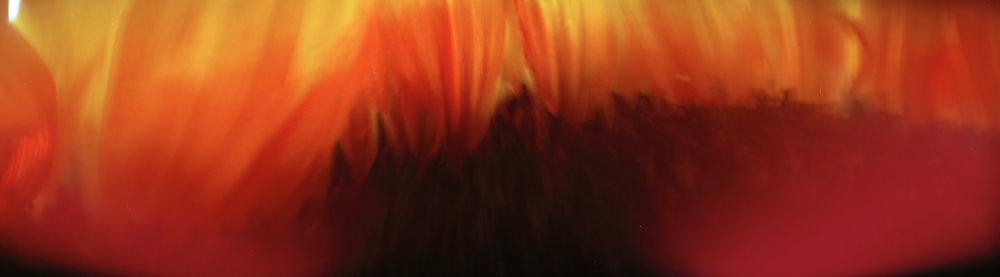 Red Sunflower (windy)
