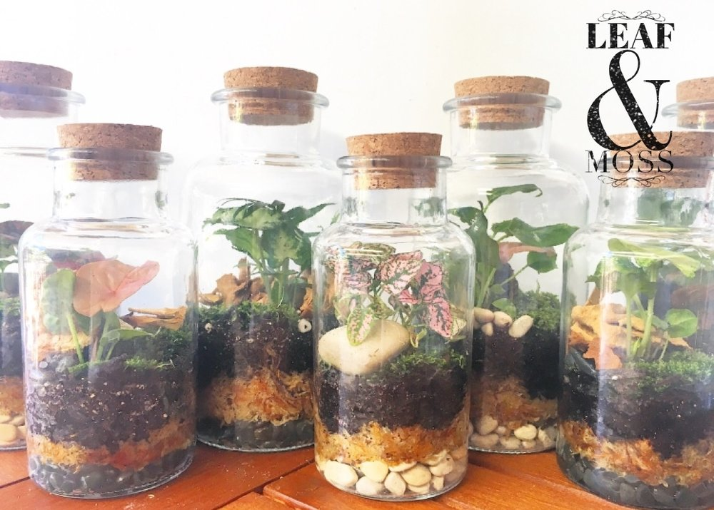 Terrariums-In-A-Bottle starting from $30