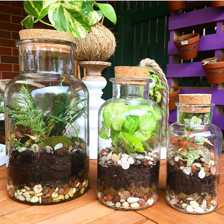 Terrarium-In-A-Bottle     L:$100    M:$50    S:$30