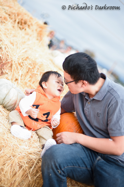 2015_pumpkin_patch-0992.jpg
