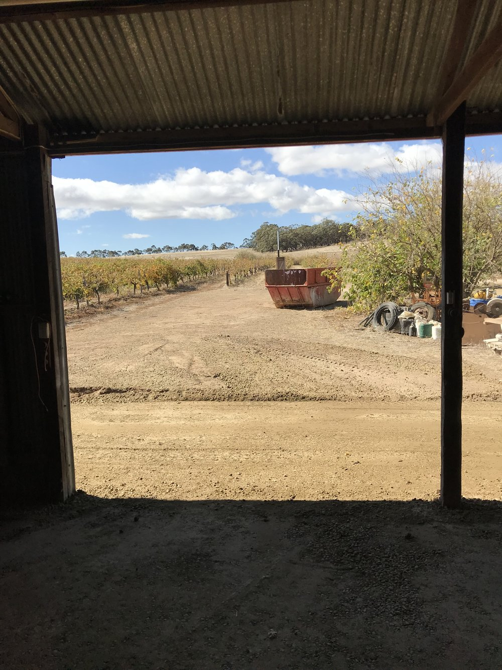 An early view from the Cellar Door