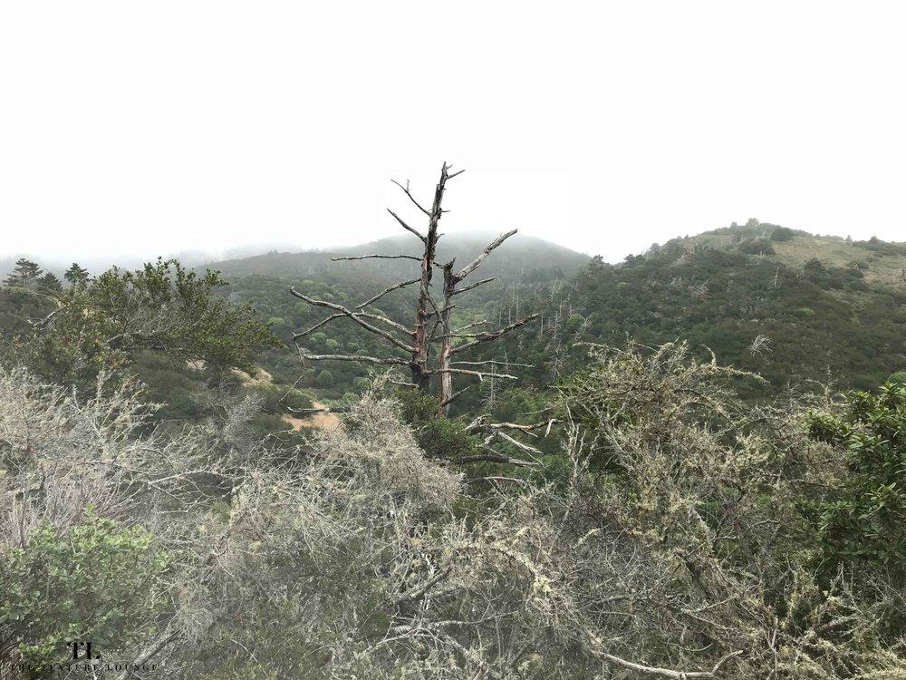 Coast_Laguna Trail