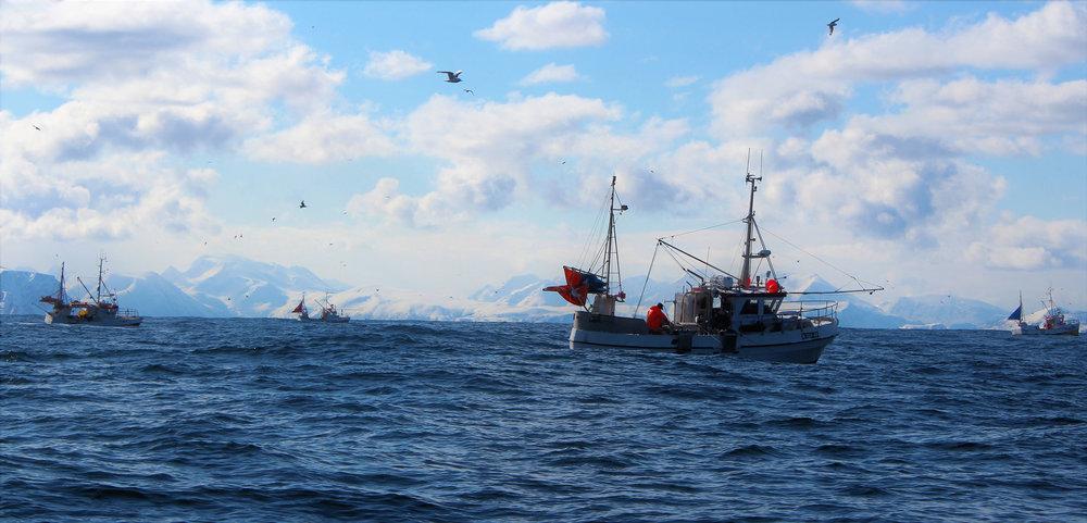 fiskebåt_web.jpg