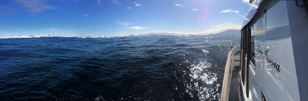 artic aurora utenfor sørøya.jpeg