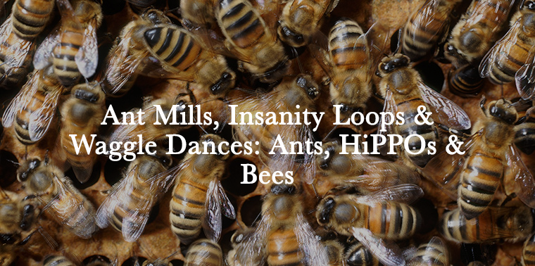 feature_honeybee_waggle_dance_main.png