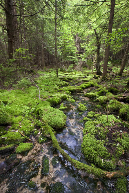 A stream in the Wooded Hemlock Bog at The Nature Conservancy's Cranesville Swamp Preserve in northern West Virginia. Natural forest management strategies can reduce carbon emission by 882 million tonnes each by 2030. Photo © Kent Mason