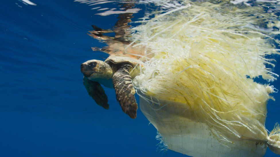 The people behind Blue Planet 2 say there was rarely a time when they were filming that they didn't come across plastic in the sea. Photo: BBC.