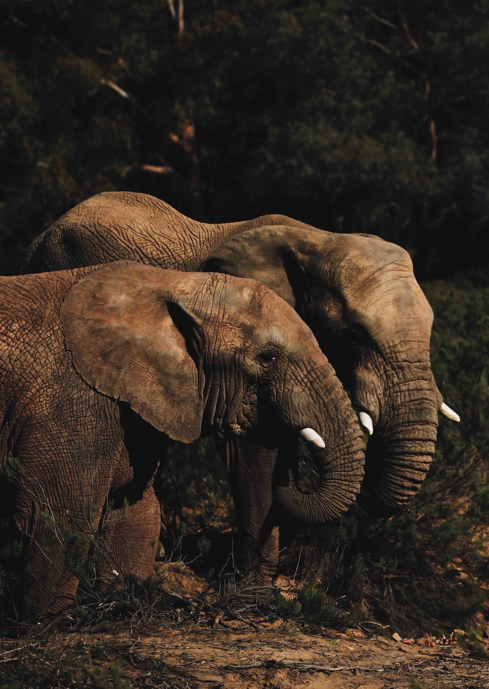 """Even better than humans': Elephant Haven's love the elephants is all-enduring.. Picture: Isabella Juskova, Unsplash"