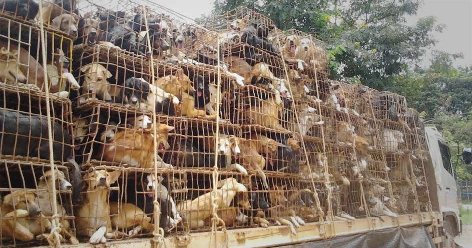 Dogs on their way to slaughter. Picture: Soi Dog.