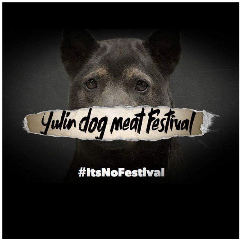 It's no festival.png