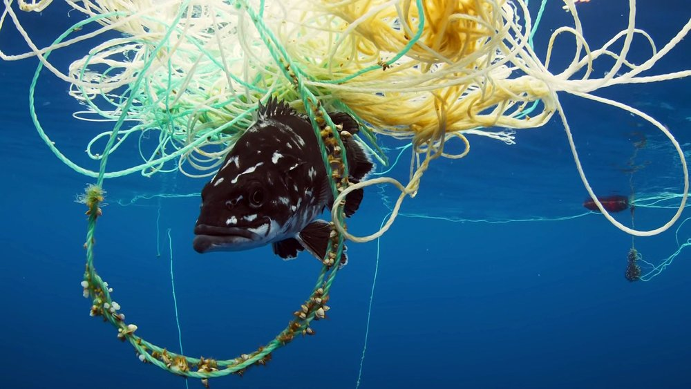 Plastic Free July has a new urgency, thanks to the BBC's Blue Planet II. Picture: Blue Planet.