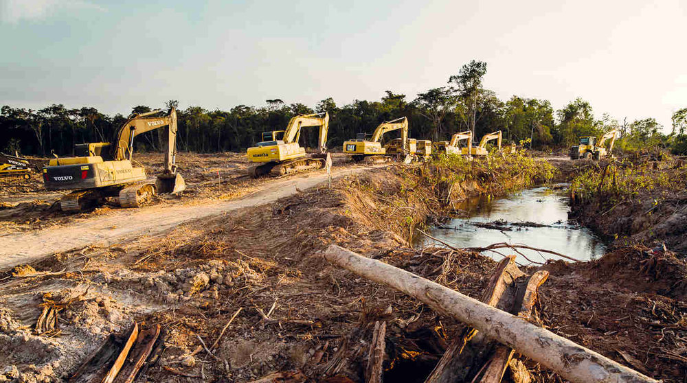 """""""The problem is that palm oil grows only in areas where the natural vegetation is rainforest or peat forest."""" Picture: Rainforest Rescue."""