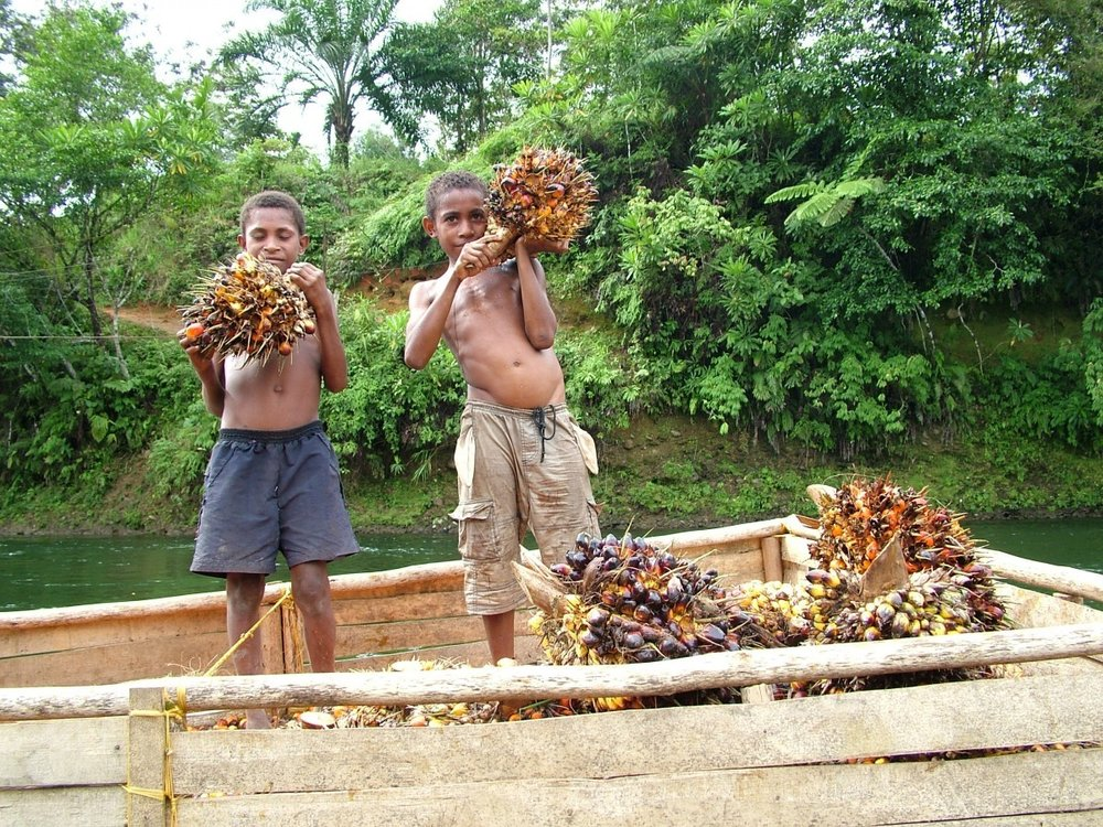 It's not just orangutans. The palm oil industry is rife with human rights abuses, including child labour. Image: Accountabilitycounsel.org