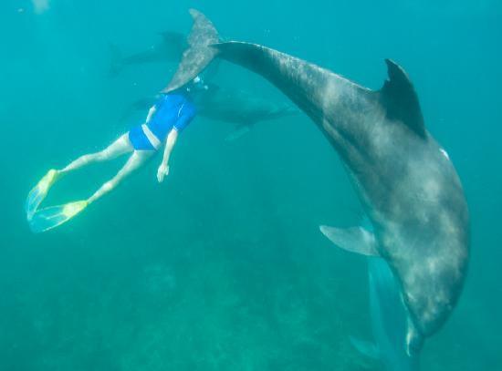 dolphin-swimming-kizingo.jpg