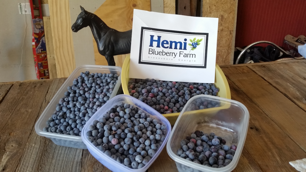 Hemi Blueberry Farm | LakeOconeeLife.com