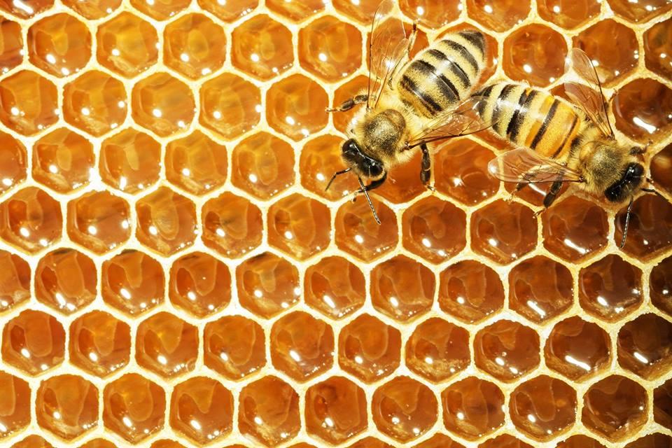 Rock Eagle- Into the hive |LakeOconeeLife.com