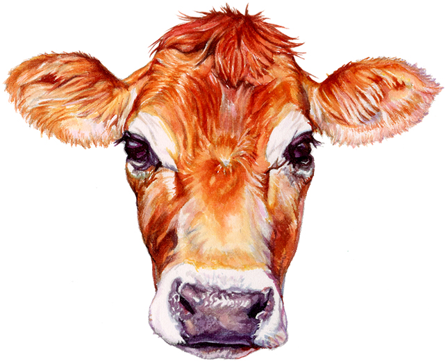 Jersey Cow for Ithaca Milk logo