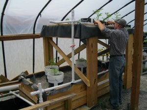 Aquaponics intern Doug adjusting the plants on our Aquaponics system in the greenhouse
