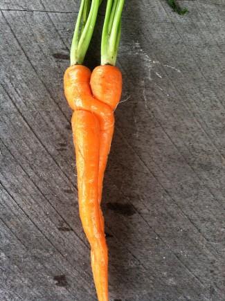 carrot hug