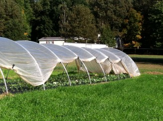The plastic cover provides extra heat that would be too much for the smaller rows with our variable weather – one warm winter day and the crops could fry. The plastic on the caterpillar tunnels can also be rolled and clamped up to allow air in during the day to avoid overheating.