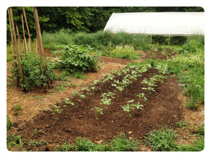 Celtic-cross shaped garden at Anathoth Community Garden & Farm in Cedar Grove (July 2014 CRAFT tour)