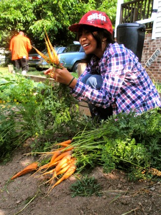 Intern Keo Ksor harvests carrots at Langley Garden