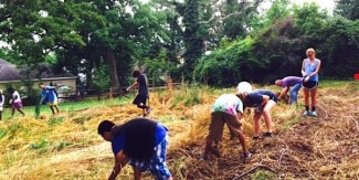 Students volunteering to clear the summer cover crop in the new IFFS growing space located at Bull City Cool!